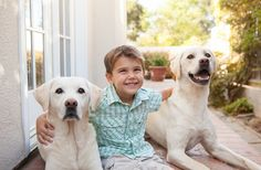 © Mary Bea Photography | lifestyle dog photography, family portraits, yellow Labrador Retrievers