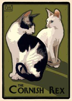 Laura Wilder – The Cornish Rex Siamese Cat Tattoos, Siamese Cats, Crazy Cats, Weird Cats, Devon Rex Cats, Cornish Rex Cat, Sphynx Cat, T Rex, Cat Breeds