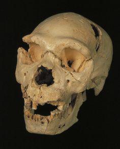 Sorpresa ADN de la Sima de los Huesos Reflexiones de un primate | Otro sitio más de Blogs Hachette.es