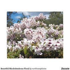 Beautiful Rhododendrons Floral Metal Photo Print