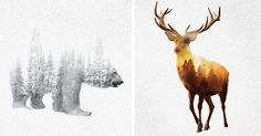 Double Exposure GIFs Of Wild Animals Show How Humans Destroy Their Habitats | Bored Panda