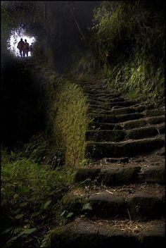 Through the Cloud Forest and into the Rainforest - Inca Trail, Peru http://incatrail.info #incatrail #machupicchu #peru
