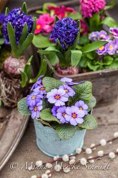 Blomsterverkstad: Våren är vacker