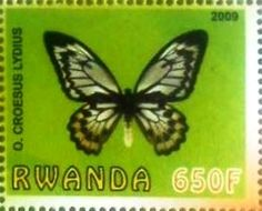 Stamp: Croesus lydius (Cinderellas) (Rwanda) Col:RW 2009-19/3