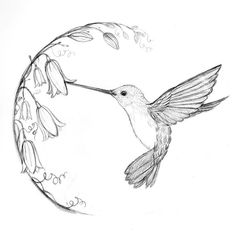 : Hummingbird tattoo love that it also has bluebells! My beloved - Hummingbird tattoo love that it also has bluebells! My beloved, - : Hummingbird tattoo lov Bird Drawings, Art Drawings Sketches, Easy Drawings, Pencil Drawings, Drawing Art, Animal Sketches, Sketch Drawing, Sketches Of Birds, Sketches Of Flowers