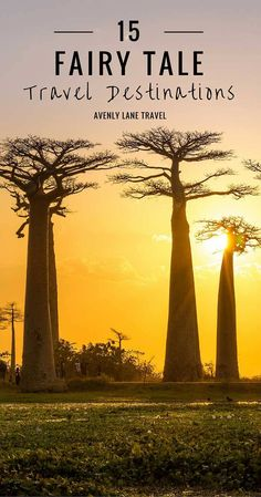 Avenue of the Baobab