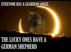 ... German Shepherd. | German Shepherd | Pinterest | The o'jays, Angel and