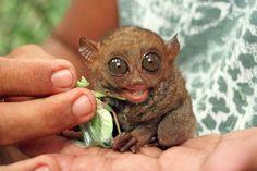 Los 10 animales más pequeños del mundo | La Bioguía