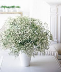 baby's breath in white vessels?