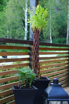 Braid willow tree trunk.  Cool! Herb Garden, Lawn And Garden, Tree Trunks, Willow Tree, Tree Houses, Topiary, The Great Outdoors, Bees, Garden Ideas