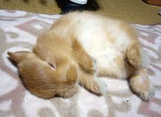 Image result for bunny sleeping