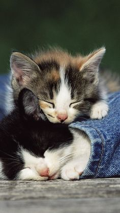 1080x1920 Wallpaper kittens, couple, spotted, jeans