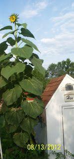 Vickie's Kitchen and Garden: My Frugal Ways This Past Week 5/31/15