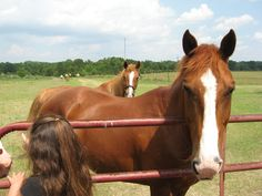 """Horse Training: How to """"Unsour"""" a Barn Sour Horse"""