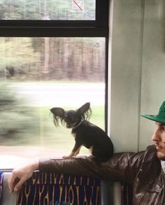 Train life  Tamara z Bursztynowej Kolekcji from Poland  Breed: Russian Toy Terrier (long haired)  https://www.instagram.com/bigearedtami/  Any questions? Email us :) bigearedtami@gmail.com