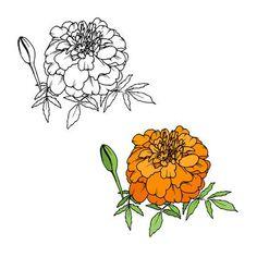 Image result for marigold line art