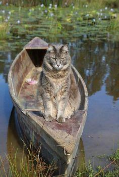 Cat On The Pond