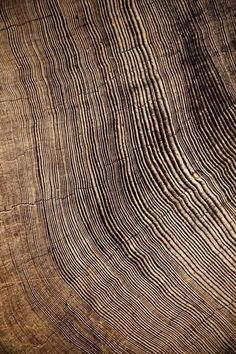 Earth Texture, Wood Texture, Natural Texture, Texture Photography, Abstract Photography, Patterns In Nature, Textures Patterns, Organic Patterns, Art Grunge