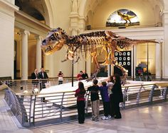Field Museum of Natural History - Chicago, Illinois. Pretty amazing that these things once lived on the earth.