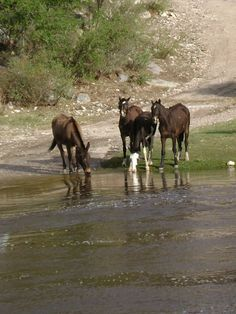 Caballos- Horses, Cordoba, Argentina