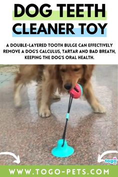BENEFITS: dog games for dog brain games. Interactive toys for dogs and puzzle for dogs. dog chew toys. It does no harm to your dogs but also helps prevent your dogs from bad breath and periodontitis caused by poor oral hygiene, and easy to clean. It can also entertain your dogs for a very long time! 🐶 SUITABILITY: Ideal for dog birthday, slow feeding dog and cat feeder. dog treat dispenser, dog treat toys. A double-layered tooth bulge can effectively remove a dog's calculus. Dog Treat Toys, Dog Chew Toys, Brain Games For Dogs, Dog Games, Dog Feeding Bowls, Dog Bowls, Cleaning Toys, Teeth Cleaning, Dog Toys For Boredom