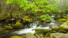 Springtime in the Smokies, Tennessee - webshots