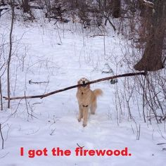 Ryd'n would try to carry sticks that were too big! He would end up dragging them!