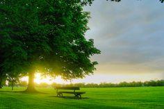 L'orme est votre arbre protecteur [#17/21]