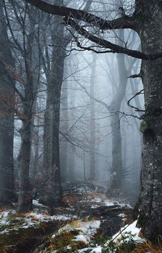6 Useful Tips For Any Landscape Design – Home Dcorz Forest Path, Magic Forest, Tree Forest, Dark Forest, Nature Landscape, Landscape Design, Forest Photography, Landscape Photography, Beautiful Forest