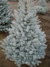 I love blue pine trees Paint Color Pallets, Single Tree, Love Blue, Tree Of Life, Christmas And New Year, Samsung, Shades Of Blue, Paint Colors, Landscape