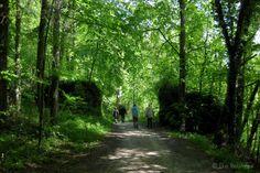 Die Raumfee: Wald rund um Burg Rabenstein über dem Ailsbachtal, Fränkische Schweiz