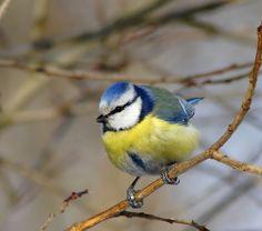 Птицы весной фото