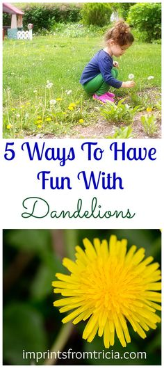5 Ways To Have Fun With Dandelions