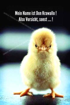 besuchen #witzigebilder #schwarzerhumor #lustig #funnypictures #ausrede #funnypicsdaily #sprüche #jungs #love #laugh