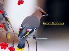 14 Best Good Morning Beautiful Birds Images Images Beautiful Birds