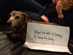 dog shaming website. So hilarious!!