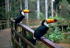 O Parque das Aves é um passeio essencial para quem visita Foz do Iguaçu localizado próximo às Cataratas do Iguaçu no Parque Nacional do Iguaçu - Paraná.  #viajandopelobrasil #wanderlust #destinosimperdiveis #parquedasaves #fozdoiguaçu #paraná by wanderlust_live