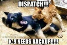 K9 needs backup!!!!!!!!!!