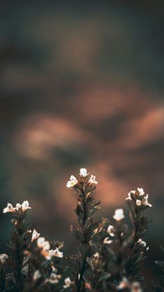 25 Ideas wallpaper white floral iphone for 2019 Flower Phone Wallpaper, Iphone Background Wallpaper, Scenery Wallpaper, Aesthetic Iphone Wallpaper, Nature Wallpaper, Wallpaper Quotes, Aesthetic Wallpapers, Iphone Backgrounds, Phone Wallpapers