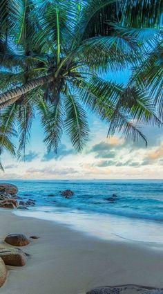 Beachy wallpaper iphone summer backgrounds palm trees Ideas for 2020 Beachy Wallpaper, Summer Wallpaper, Beautiful Wallpaper, Travel Wallpaper, Wallpaper Desktop, Iphone Wallpapers, Palm Tree Iphone Wallpaper, Beach Pictures Wallpaper, Ocean Wallpaper