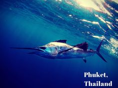 Phuket, Thailand is one of the world's best fishing spots