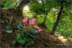 Photo by Danilo Bassani - Pixdaus Orchid Plants, Orchids, Wild Flowers, Places To Visit, Colours, America, History, Floral, Nature