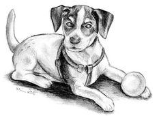 Amy Jack Russell Terrier Hund Haustier Bleistiftzeichnung Zeichnung Welpe Ball Platz