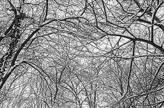 winter contact Landscape, Park, Abstract, Winter, Artwork, Nature, Winter Time, Scenery, Work Of Art