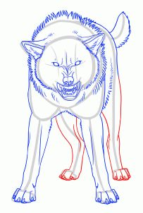 how to draw an angry wolf step 20