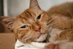 *SUPER URGENT**NY  This lovely cat had a second chance at this high kill shelter. He is 6 yrs old, his name is MARCO and his animal ID # is A0892163. If you want to adopt or foster this boy, please act fast. Gingers are so sweet!
