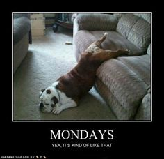 Mondays.  Yeah, it's kind of like that.