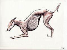 dessin de ito - sanguine et encre de chine - Galga.
