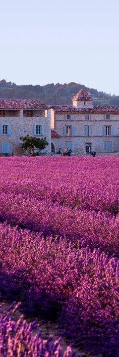Abbaye Notre-Dame de Sénanque - Gordes, Provence | France #LavenderFields