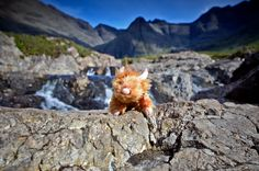 Highland Coo (cow) at Fairy Pool,Isle of Skye, Scotland, 11.7x16.5in Print by Moodlandscapes on Etsy